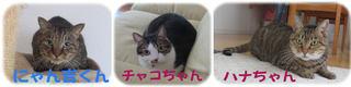 流山市 ミックス猫の飼い主様の声