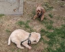 カニコちゃん達 松戸市 犬のペットシッター