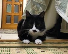 マメくん達 松戸市 犬と猫のペットシッター