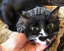 ととちゃん達 松戸市 猫のペットシッター