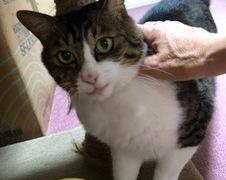 チビちゃん達 流山市 猫のペットシッター