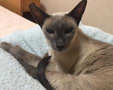 にれんちゃん 流山市 猫のペットシッター