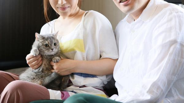 ペットシッターへの賢い依頼方法! 猫の性格を伝えることでケアの質も上がる