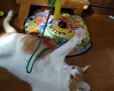 チーくん 松戸市 猫のペットシッター