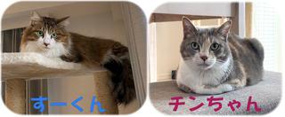 流山市ミックス猫の飼い主様の声