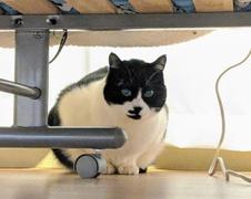 フリオくん達 柏市 猫のペットシッター