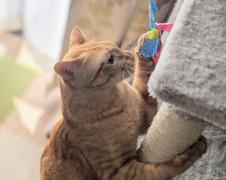 れみちゃん 桜太くん 流山市 猫のペットシッター