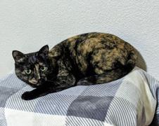 フリオくん 柏市 猫のペットシッター