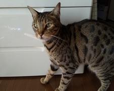 鈴ちゃん ナッツくん 松戸市 猫のペットシッター