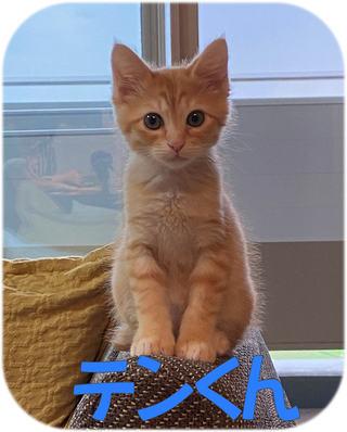 柏市 ミックス猫の飼い主様の声