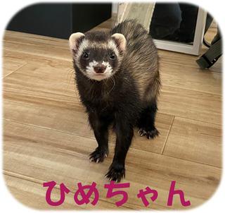 松戸市フェレットの飼い主様の声