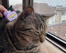 レオくん 太郎くん 柏市 猫のペットシッター
