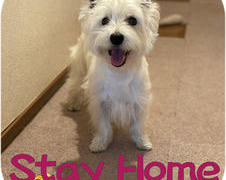 Stay Home  お家で過ごそう!