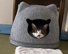 トラくん アイくん 松戸市 猫のペットシッター