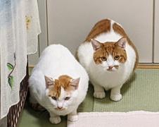 メルちゃん親子 松戸市 猫のペットシッター