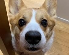 トッポちゃん 柏市 犬のペットシッター