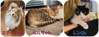 松戸市 シェルティ ベンガル ミックス猫の飼い主様の声
