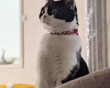 りんちゃん 柏市 猫のペットシッター
