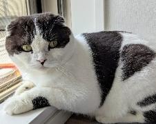 くぅくん 柏市 猫のペットシッター