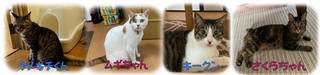 松戸市 ミックス猫の飼い主様の声