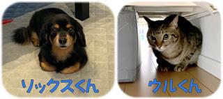 松戸市 ミックス犬の飼い主様の声