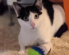めいちゃん むいくん 松戸市 猫のペットシッター