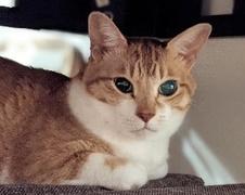 レオくん 太郎くん 松戸市 猫のペットシッター