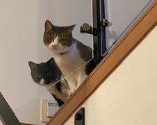 れんげちゃん すみれちゃん 流山市 猫のペットシッター