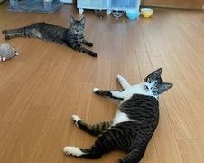 ロンちゃん チーちゃん 松戸市 猫のペットシッター
